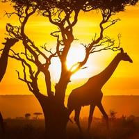 kenya_Dan_favourite_holiday_DesignPit